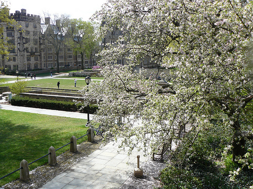 View of Yale outside my guest suite window