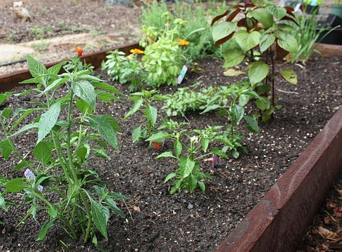 2013-Asian-herb-bed