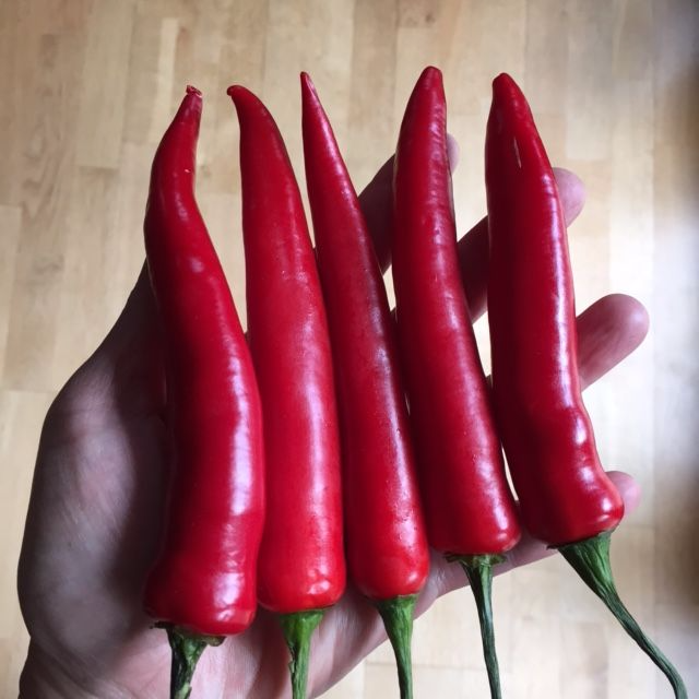 Chiles-long-finger-chiles