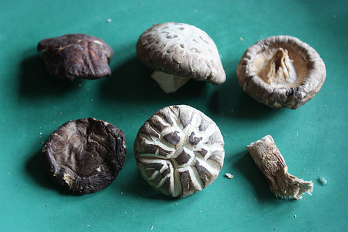 Dried-shiitake mushroom