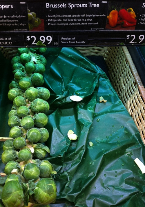Brussels-sprouts-tree