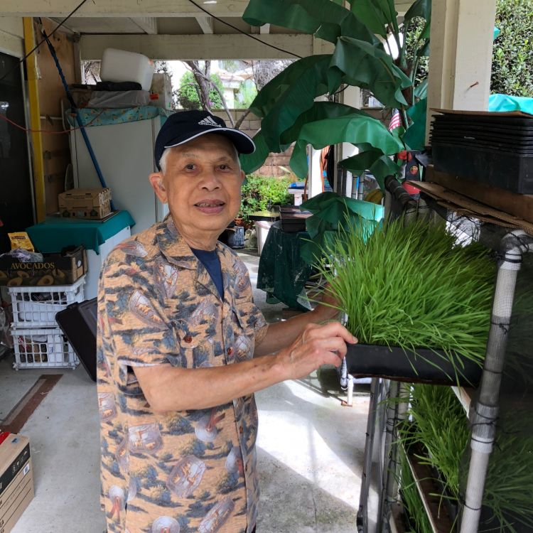 Dad's wheatgrass juicing and growing tips.
